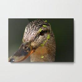 Duckweed Metal Print