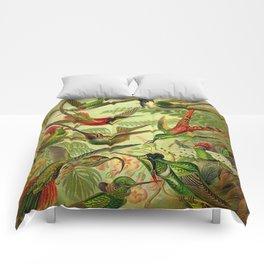 HUMMINGBIRD COLLAGE- Ernst Haeckel Comforters