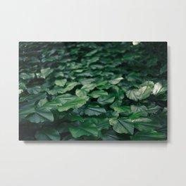 Vibrant leaves on the island of Sentosa, Singapore Metal Print