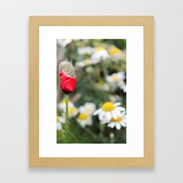 Poppy and daisies Framed Art Print