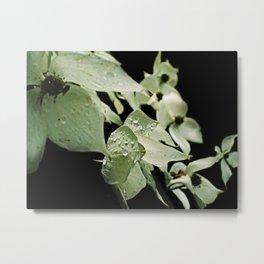 Dogwood Raindrop Elegance Metal Print
