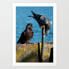 Drinking Pigeons Art Print
