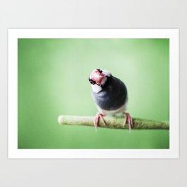 A Finch's Curiosity Art Print