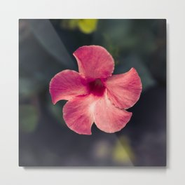 Flower Photography by Tra Tran Metal Print
