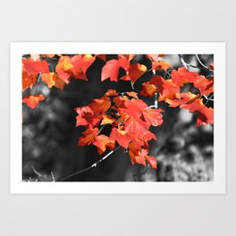 Cold Fall Art Print