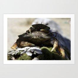 Crab Duo Art Print