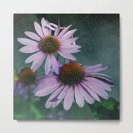 Beautiful summer with pink Echinacea / Daisy flowers Metal Print