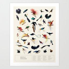 Birds-of-Paradise Poster Art Print