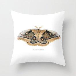 Oculea Silkmoth (Antheraea oculea) Throw Pillow