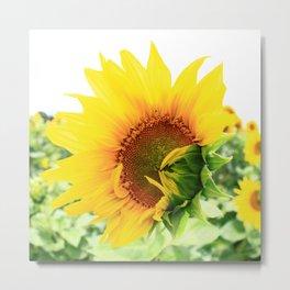 Sunflower 18 Metal Print