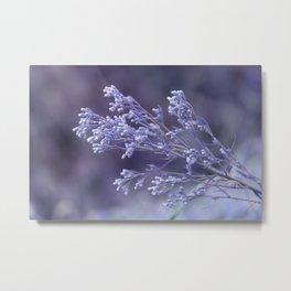 dew drops on wildflower Metal Print