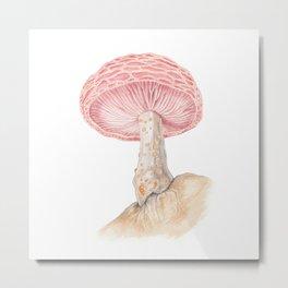 Mushroom - Wrinkled Peach Mushroom Watercolour Print - RHODOTUS PALMATUS By Magda Opoka Metal Print