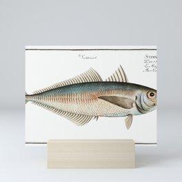 Scad (Scomber Trachurus) from Ichtylogie, ou Histoire naturelle génerale et particuliére des poisson Mini Art Print