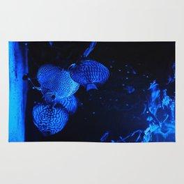 Aquarium fishes in blue light. Rug