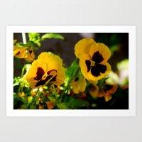 Yellow pansy garden Art Print