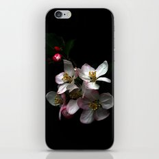 Apple blossom iPhone & iPod Skin