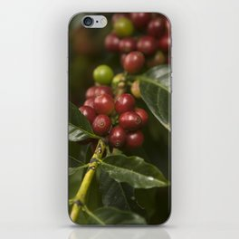 Coffee Seeds iPhone Skin