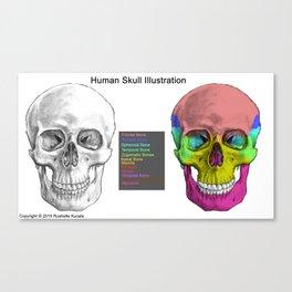 Human Skull Anatomy Canvas Print