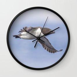Razorbill in flight Wall Clock