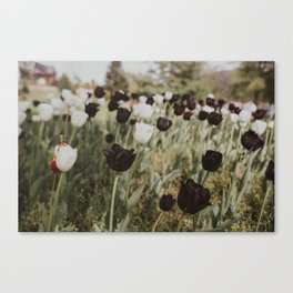 Tulips in Germany Canvas Print