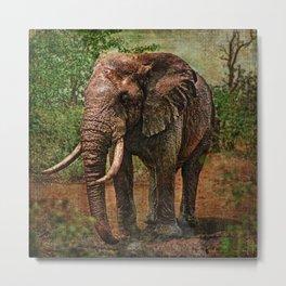 Rembrandt the Elephant Metal Print