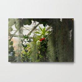 Hibiscus No. 2 Metal Print