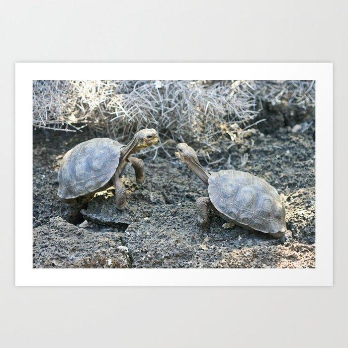 Baby giant tortoises acting tough Art Print