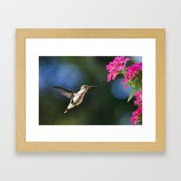 Ruby Throated Hummingbird III Framed Art Print