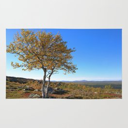 Autumn in the mountains a sunny day with blue sky. Birch with yellow leaves. Rug