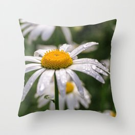 White daisy with rainy droplets Throw Pillow