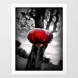 Poppy Glow Art Print