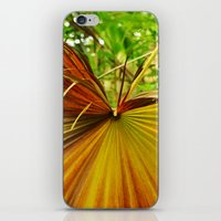 plant iPhone & iPod Skins featuring Plant by Rebecca Brianne