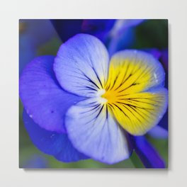 Pansy Close-up Square Metal Print