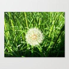 Dandelion Remnants Canvas Print