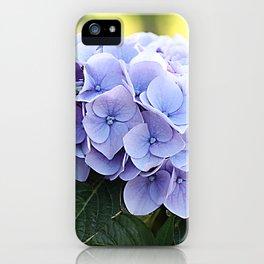Purple hydrangea(1) iPhone Case