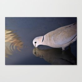 Turtle Dove Ripples - Natural Patterns Canvas Print