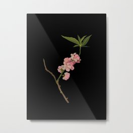 Amygdalus Persica  Mary Delany Delicate Paper Flower Collage Black Background Floral Botanical Metal Print