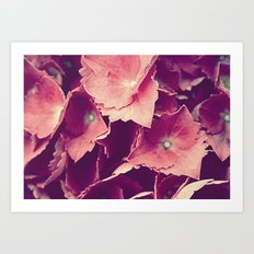 purple flowers Art Print