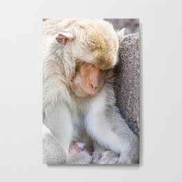 Monkeys of Thailand Metal Print