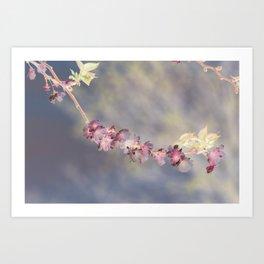 Cherry Blossom Inversion Art Print