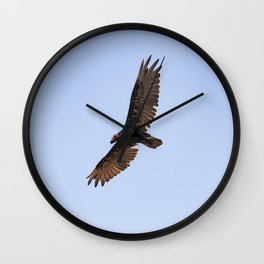 Wild Jolla Wall Clock