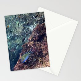 Lined Surgeonfish Stationery Cards
