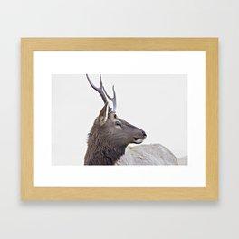 Deer, animal Framed Art Print