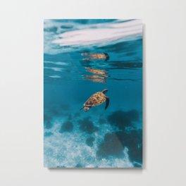Turtle iii Metal Print
