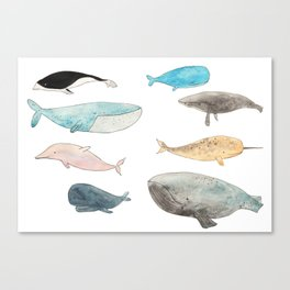 Group of whales Canvas Print