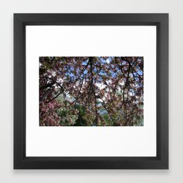 Spring Blossoms II Framed Art Print