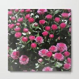Pink Garden Mums  Metal Print