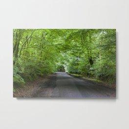 Summer Beech Canopy 2 Metal Print
