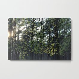 Sunlight and Oak Trees Metal Print