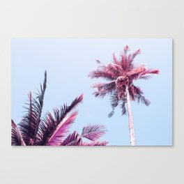 Pink Coco Palm Trees on Blue Sky Tropical Summer Poster Canvas Print
